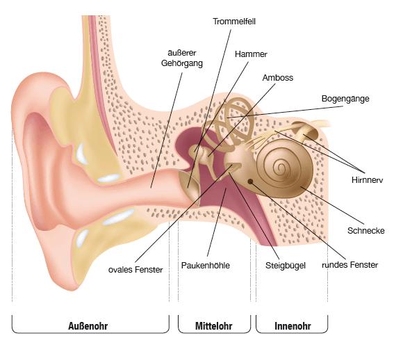 Aufbau-des-Ohres